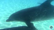 Sea World Dolphin