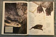 DK Encyclopedia Of Animals (42)