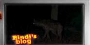 Hyena, Spotted (Bindi the Jungle Girl)