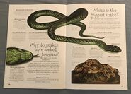 Reptiles (Over 100 Questions and Answers to Things You Want to Know) (12)