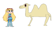 Star Meets Domestic Bactrian Camel