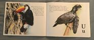 The Bird Alphabet Book (12)