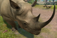 Zoo Tycoon 2013 Black Rhino