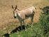 2004 01 03 - western plains zoo - 129 2980-9840
