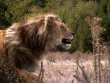 We're Back!: A Pleistocene Animal's Story
