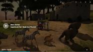 Bears Kangaroos Cats Zebras Hippopotamuses and Rhinoceroses