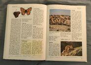 The Kingfisher Illustrated Encyclopedia of Animals (168)