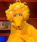 Big Bird in The Colbert Report