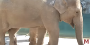 Fresno Chaffe Zoo Asian Elephant