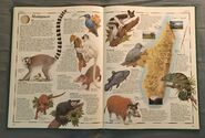 The Animal Atlas (17)