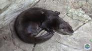 Tulsa Zoo Otter