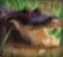Alligator-disneythinkfast