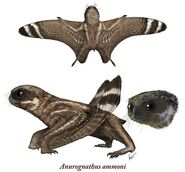 Anurognathus Details