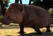 Hippopotamus-zootycoon3