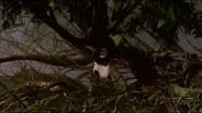 Pandavision panda