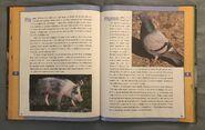 Scholastic Encyclopedia Of Animals (39)