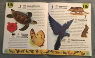 Endangered Animals Dictionary (10)