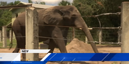 Jacksonville Zoo Elephant