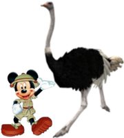 Mickey Meets Ostrich