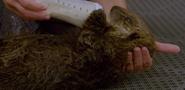 The Aquarium Sea Otter