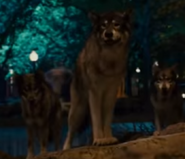 Zookeeper 2011 Wolves