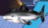 Great white shark reader rabbit 1st grade