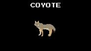KPS Coyote