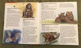 My First Book of Animals from A to Z (2)
