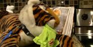 SML Tiger