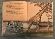 Awesome Animals (Road to Reading) (18)