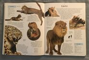 DK Encyclopedia Of Animals (105)