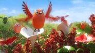 TheJungleBunch Hummingbirds