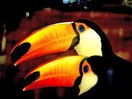 Toucans Can Do