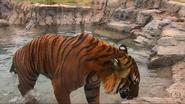 Tulsa Zoo Tiger