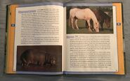 Scholastic Encyclopedia Of Animals (25)