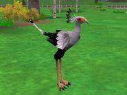 Zt2-secretarybird