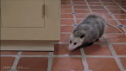Clockstoppers Opossum
