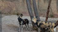 El Paso Zoo Dogs