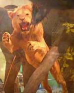 Great Plains Zoo Lion