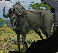 Black Wildebeest in TLK Wild Schemes and Catastrophes