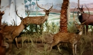 Rolling Hills Zoo Chitals