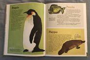 The Dictionary of Ordinary Extraordinary Animals (39)