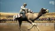 UTAUC Camel