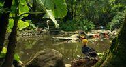Life.of.Pi Tropical Birds