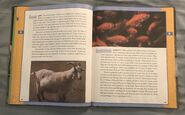 Scholastic Encyclopedia Of Animals (21)