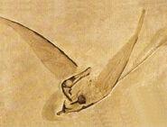 Rhamphorhynchus-encyclopedia-3dda