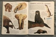 DK Encyclopedia Of Animals (76)