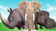 Hippopotamus Rhinoceros and Elephant