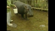 Maximum Exposure Hippo