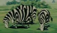 Ox-tales-s01e087-zebra